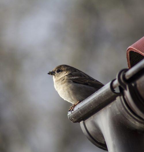 Vogelwering plaatsen